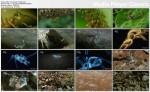 Upiorne Robale / Monster Bug Wars (2011) PL.1080i.HDTV.x264 / Lektor PL