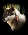 [galería] Imágenes Furry 2fc555171176236