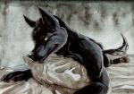 [galería] Imágenes Furry 5ab0d4171176121